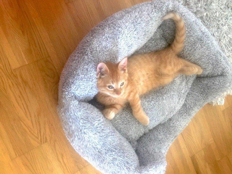 Erstausstattung für eine Katze: Was brauchst du alles?Katzenklo, Katzenspielzeug und so weiter. Katzenfritz gibt Tipps.