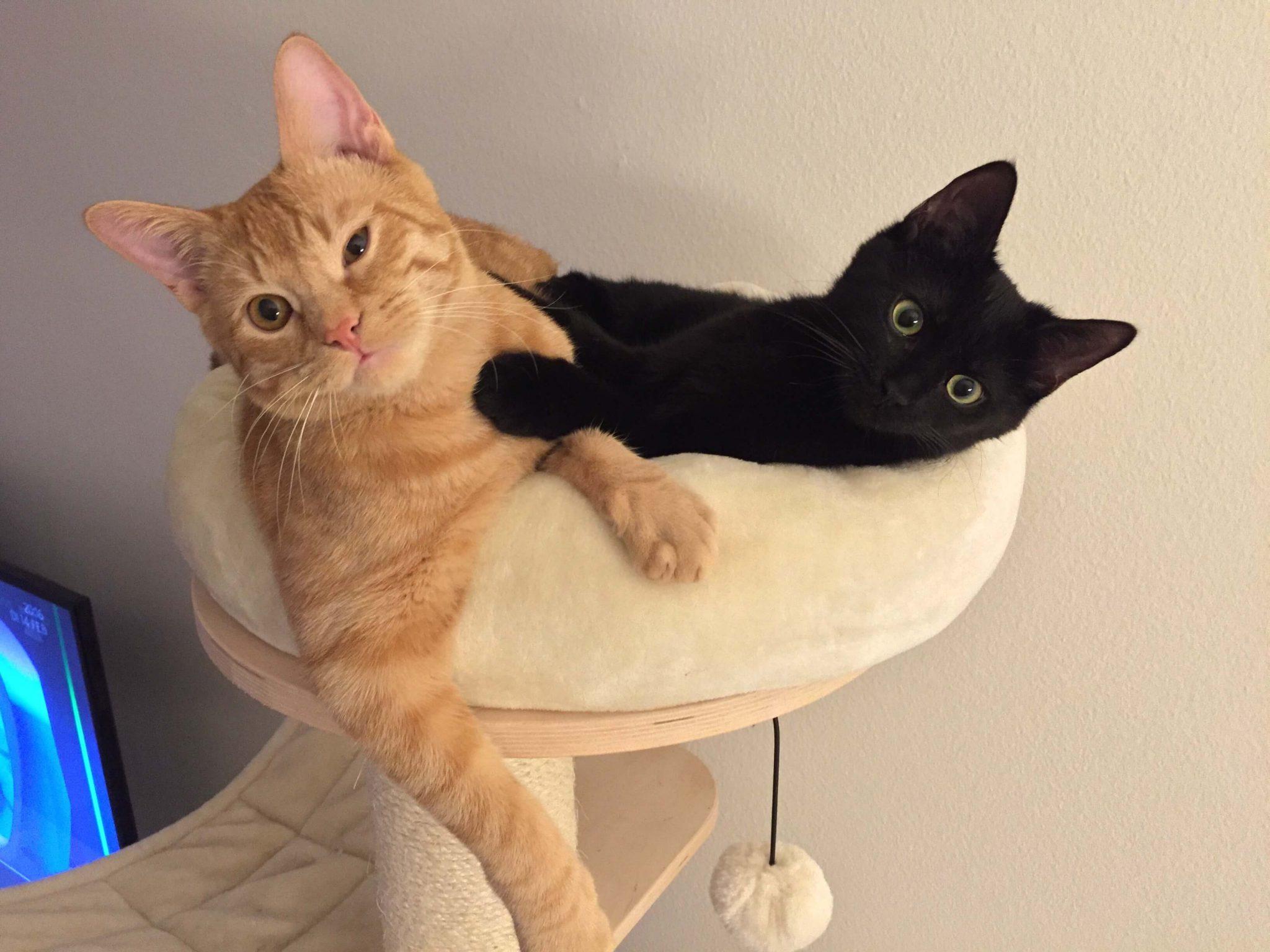 Alles rund um die Katze bei katzenfritz.ch