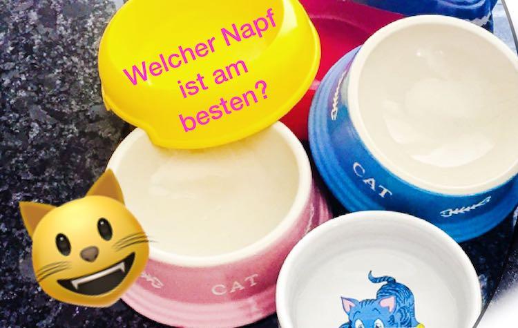 Napf-Vergleich: Welcher Napf für die Katze?Katzenfritz sagt dir, ob ein Keramiknapf, Metallnapf oder Plastiknapf am besten ist.