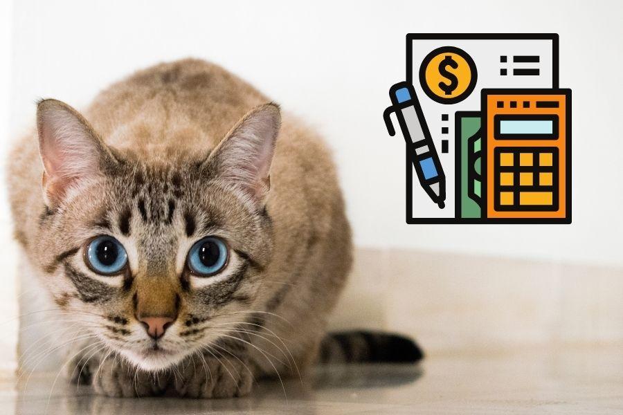 Kosten-Katzenhaltung