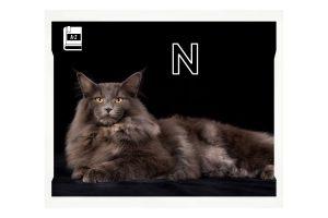 norwegische-waldkatze