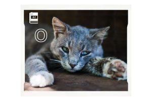ojos-azules-cat